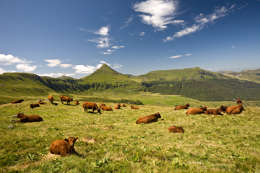 Auvergne_cantal_puy_mary_vache_salers_003287.jpg